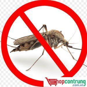 kiểm soát muỗi