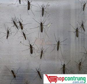 muỗi gây hại