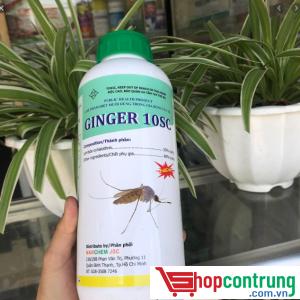 thuốc phun muỗi Ginger 10SC