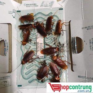 Keo bẫy côn trùng bò