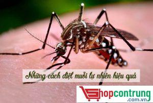 diệt muỗi cách tự nhiên