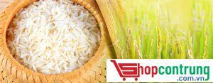 gạo ngon đất Việt