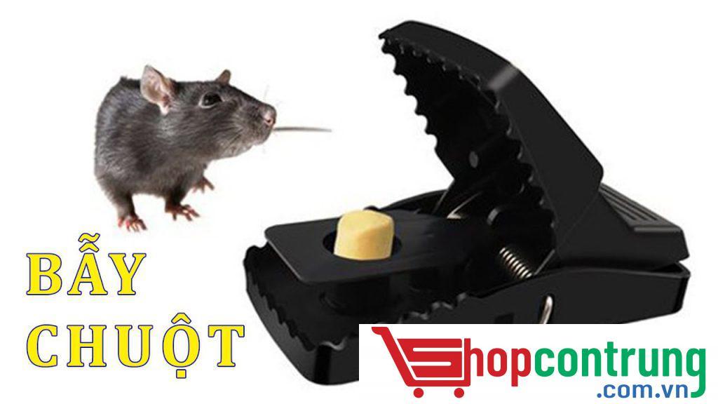 bẫy chuột thông minh