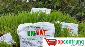 Thuốc diệt chuột BIORAT trên lúa